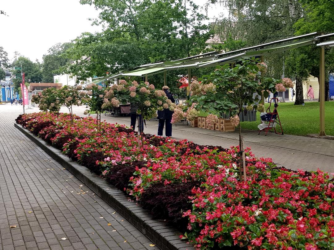 Druskieniki-kwiaty